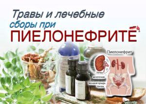 Какие травы можно принимать при пиелонефрите