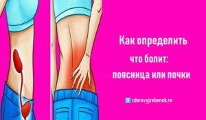 Как понять болит почка или спина