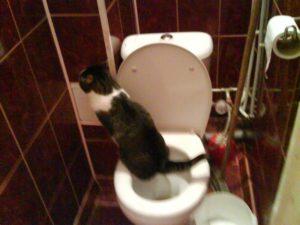 Не могу сходить в туалет по маленькому не хочется