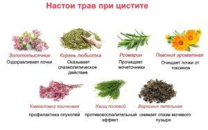 Цистит симптомы и лечение народными средствами