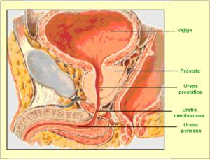 После мочеиспускания тяжесть в мочевом пузыре