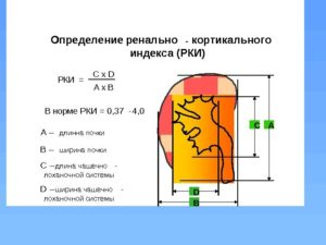 Ренальный индекс почки