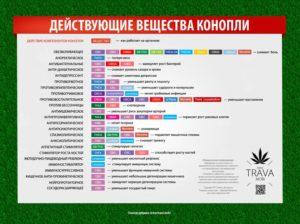 За сколько из организма выводится марихуана