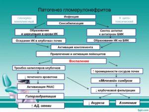Патогенез протеинурии и гематурии при остром гломерулонефрите