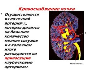 Нарушение кровотока в почках