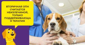 Отказывают почки у собаки симптомы и лечение