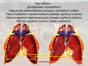 Болит почка слева при вдохе