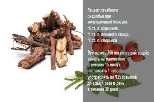 Как приготовить корни шиповника для лечения почек