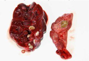Красное вино и мочекаменная болезнь