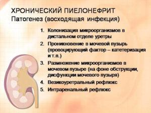 Обострение хронического пиелонефрита симптомы и лечение