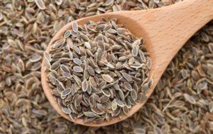 Семена укропа при лечении почек