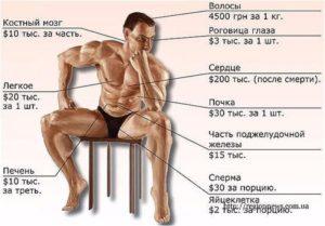 Сколько стоит почка человека в белоруссии
