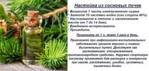 Сосновые почки настойка на водке лечебные свойства