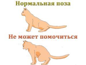 Как помочь коту пописать при мочекаменной болезни