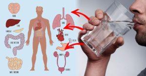 Вредно ли пить много воды при больных почках