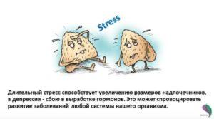 Надпочечники и стресс