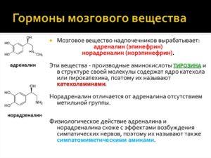 Адреналин гормон надпочечников