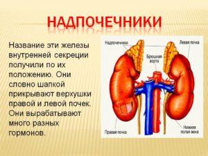 Почки щитовидная железа