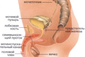 Боль в мочевом канале у мужчин