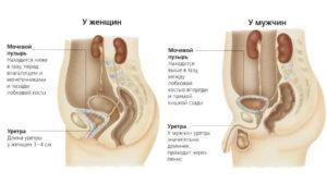 Почему болит мочеиспускательный канал у женщин