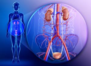 Болезни почек и мочевыделительной системы