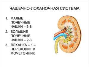 Расширена чашечно лоханочная система у ребенка