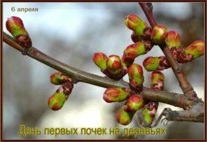 Что такое почка дерева