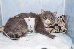 У кота отказали почки как лечить